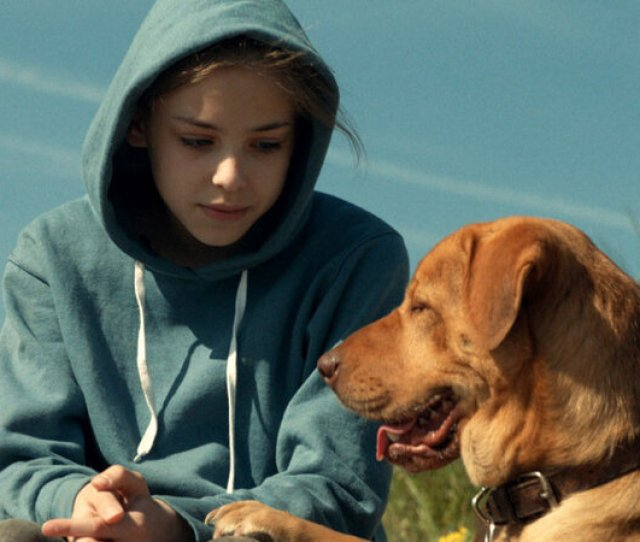 A Hollywood Animal Trainers Secrets For Getting Dogs To Act On Cue