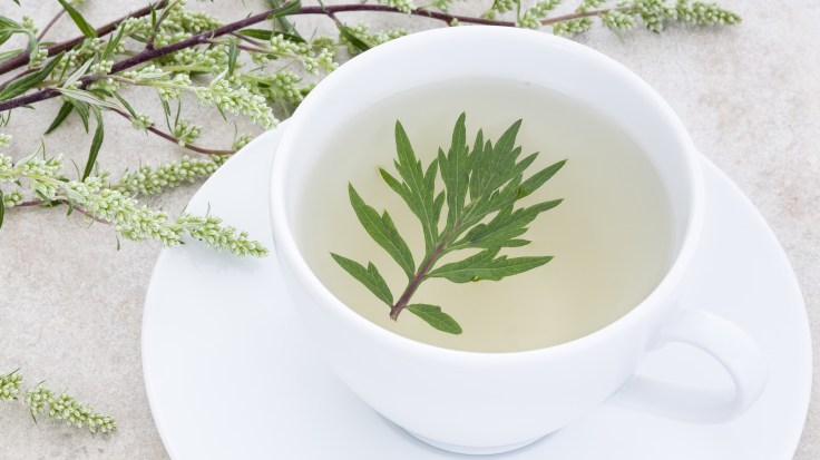 Tea made from the wormwood plant. Wormwood tea has been used as a remedy for fever, liver and gall bladder ailments — and now it