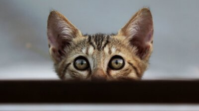 Cats Might Not Act Like It, But They Know Their Names As Well As Dogs, Study Says