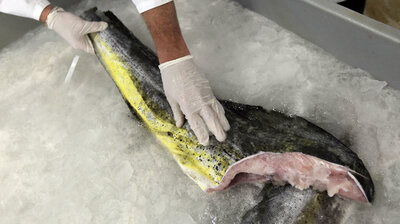 Seafood Without The Sea: Will Lab-Grown Fish Hook Consumers?