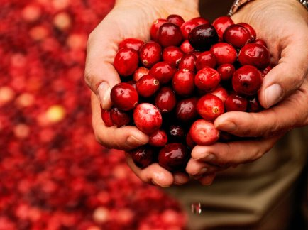 Person holding cranberries