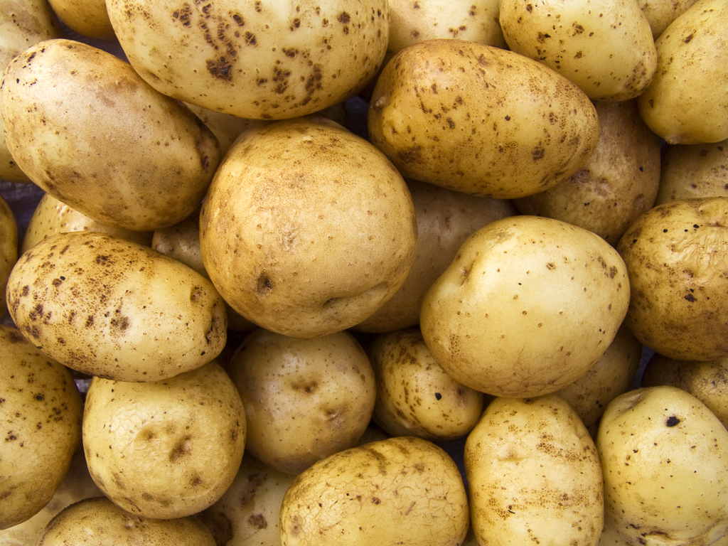 Pomme de terre Agria : culture et consommation - Ooreka