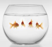 https://i1.wp.com/media.ooreka.fr/public/image/aquarium-bocal-preview-8211020.jpg