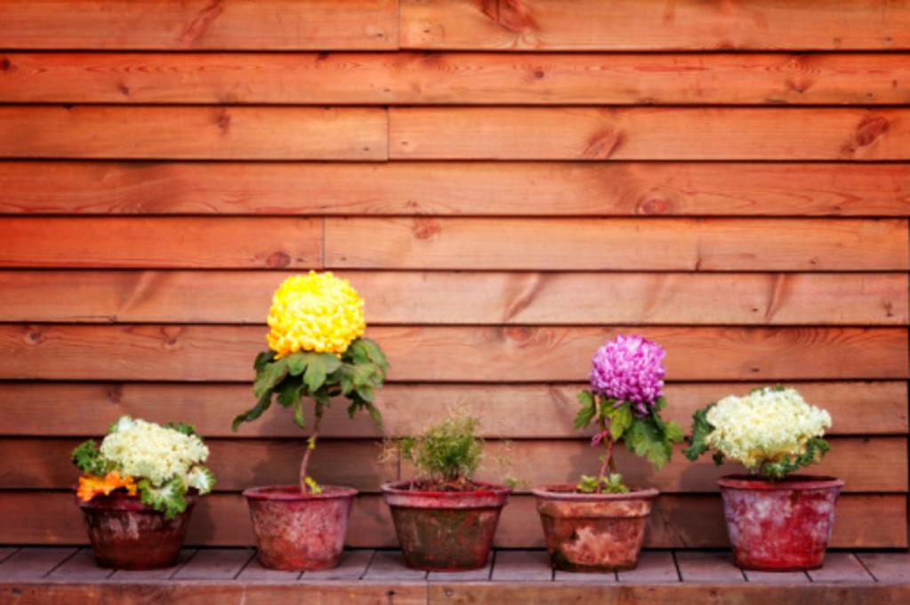 bacs et pots a plantes quel materiau