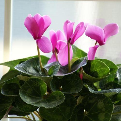 plante fleurie d interieur liste ooreka