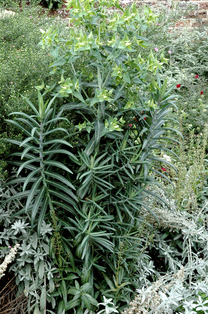 Herbe 224 Taupe Planter Et Entretenir Ooreka