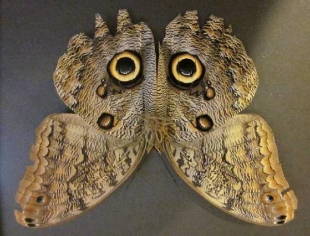 Mimtisme Animal Ou Lart Du Camouflage Malin Paperblog