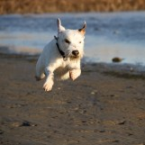 Min flygande parson Baxter