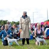 Gotland 2010-08-28 BIR Danscan's Glorius Gladys BIM Emblazy's Illbatting