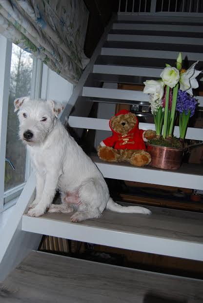 131225 Teddy o Teddy