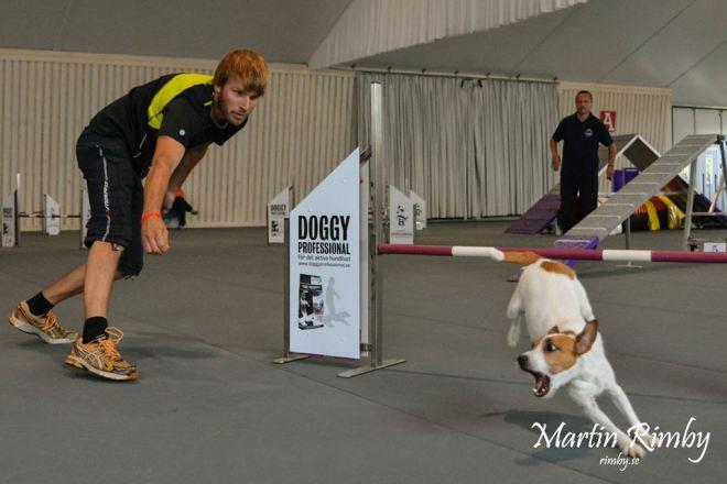 Pride vann SvTeKs Årets agilityterrier 2014 i mediumklassen. Hennes förare heter Martin Skönvall.