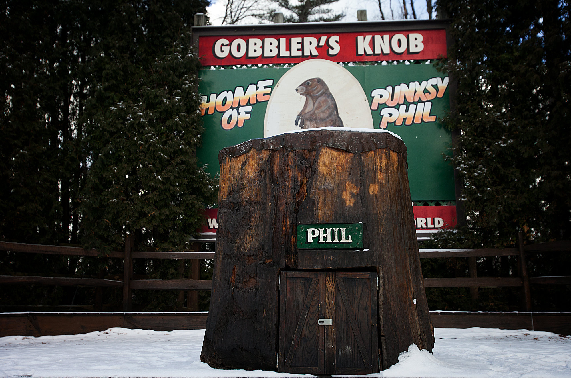Image result for punxsutawney phil
