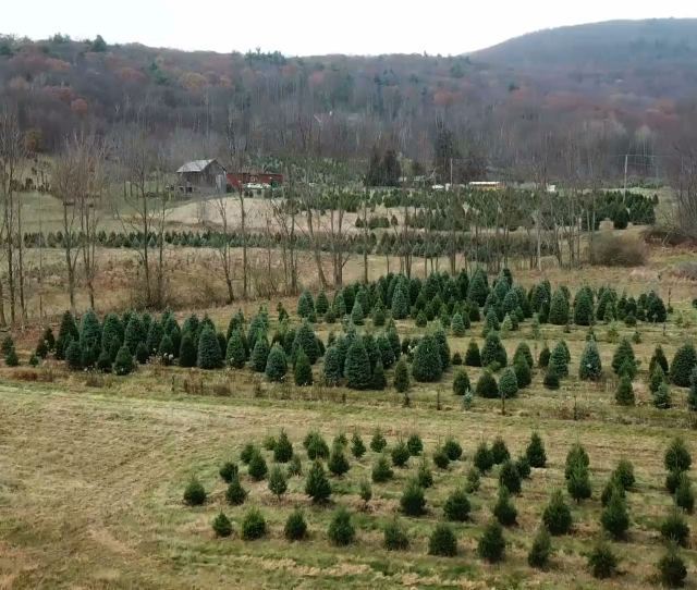 Why Pennsylvanias Private Forests Getting Split Up Is A Problem Philly