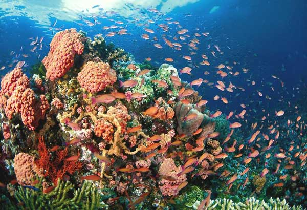 Phl, Australia launch project on coral reefs, mangroves ...