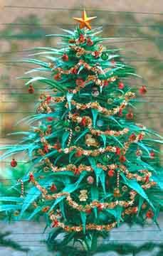 Image result for Cannabis themed tree