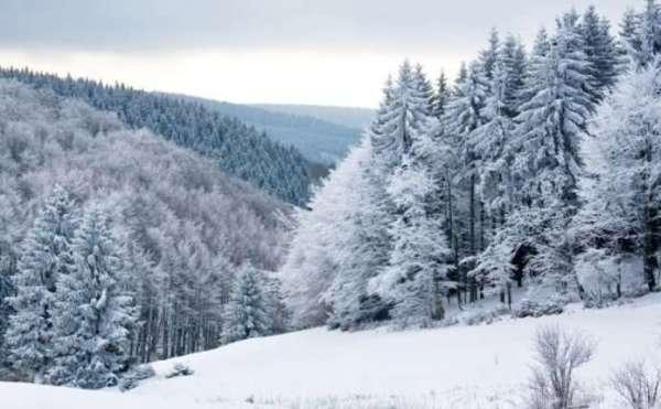 Мороз і ожеледиця. Погода 22 січня у Чернівцях та в ...