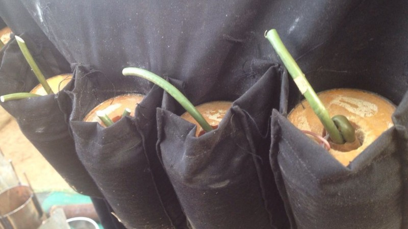 FILE PHOTO: Suicide-bomb-vest-duly-primed-by-the-terrorists