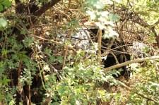 A car found in the camp