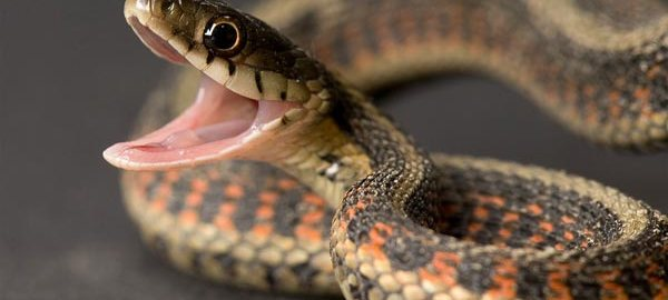 Snake used to illustrate the story.