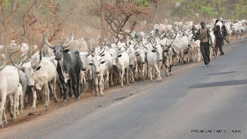 A herd of Cattle