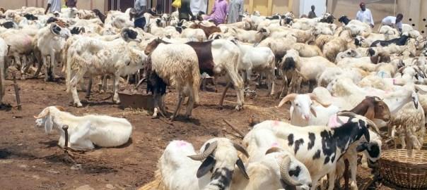 Zango Ram Market in Kaduna