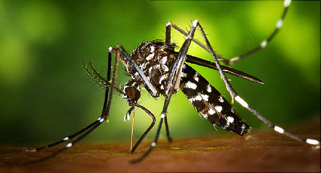 Nigeria's malaria prevalence rate still high - Entomologist