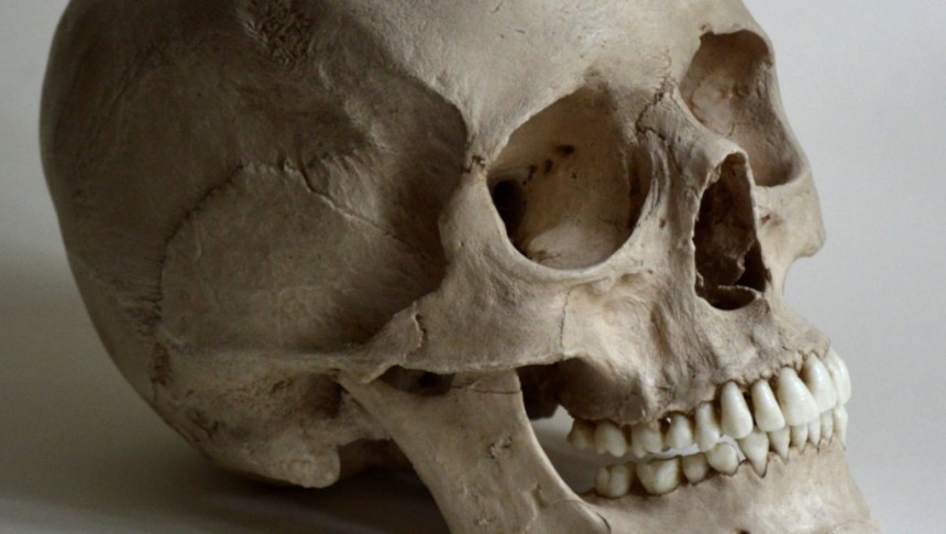 A human skull used to illustrate the story