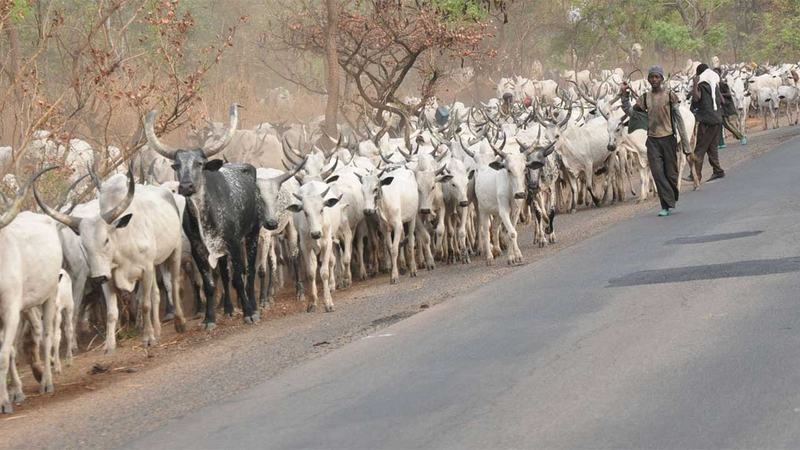 Image result for taraba assembly passes anti-open grazing bill into law