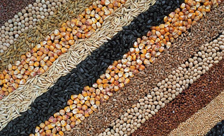 Russian grains [Photo: Russia-IC]