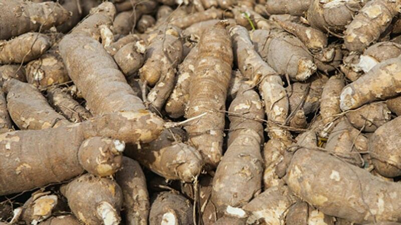 cassava-farming-resized-800