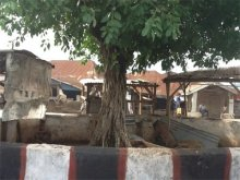 Picture of a tree used to illustrate the story [Photo: The Nation]