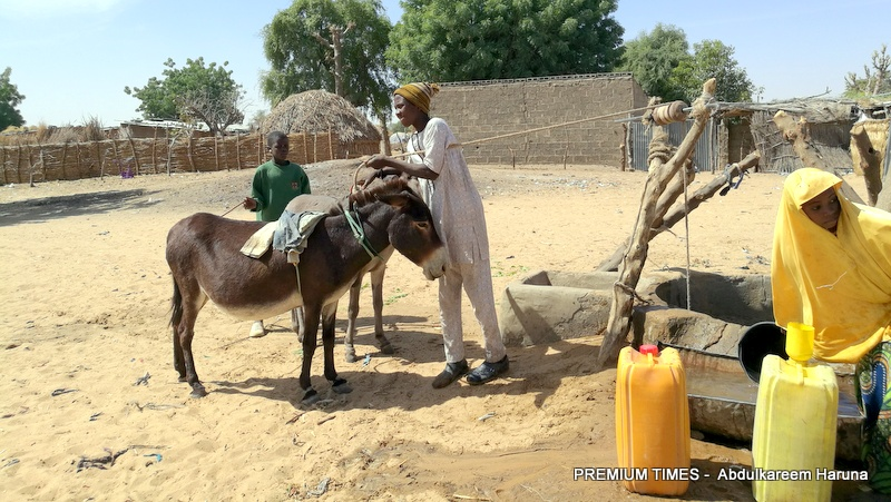 Donkey waiting to pull out pail of water from a 30 years old well