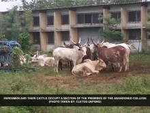 Herdsmen and their cattle occupy a section of the premises of the abandoned college