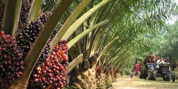 Palm trees used to illustrate the story