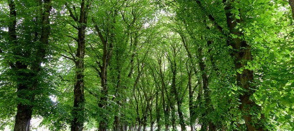Photograph of trees lining a path. {NASA Climate Kids}