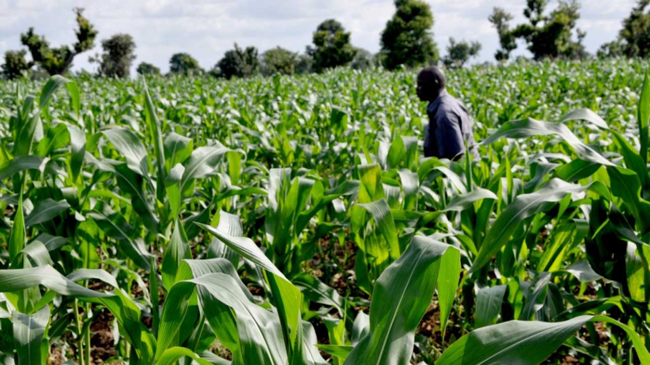 185,000 to access CBN agric loans nationwide – NDE