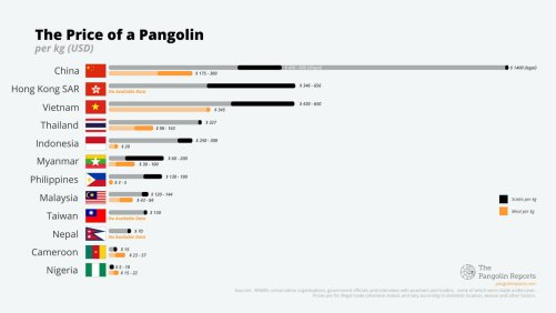 Gfx: Pangolin prices in various countries