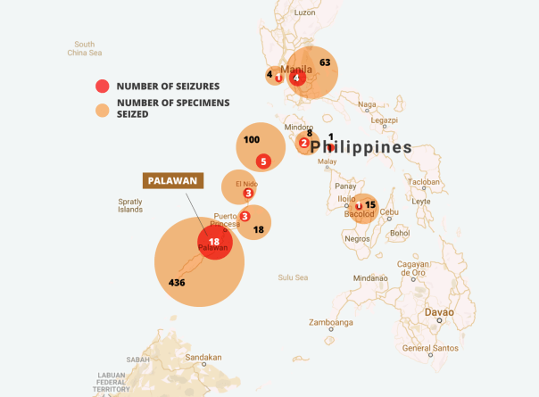 The majority of seizures occur around Palawan, and in the Metro Manila area, where there is increasing demand for its meat and scales. Data: TRAFFIC