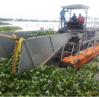 Hyacinth on waterways