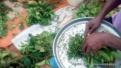Ugu as being sliced after purchased.