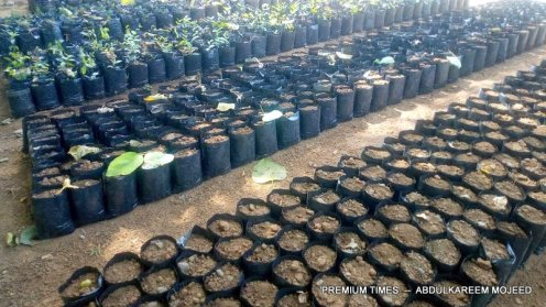 Nursery bags filled with soil