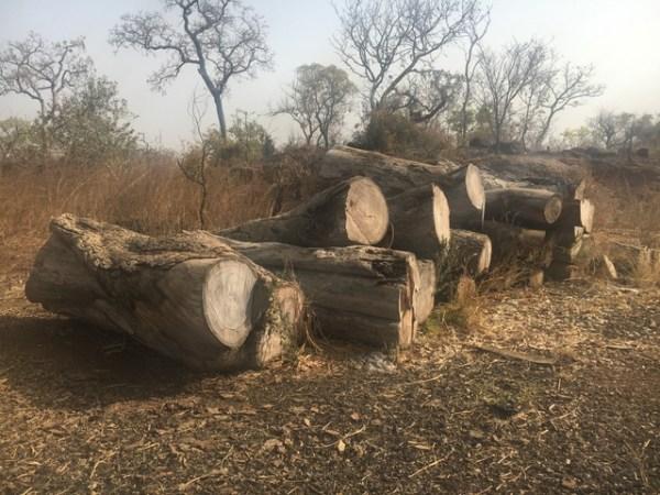 Ghana Abandoned logs