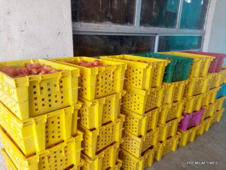 Fresh harvested tomatoes well arranged in the crates.jpg (Photo Credit: Mary Izuaka)