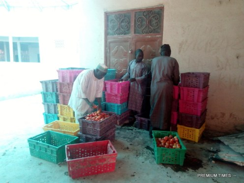 Tomatoes farmers sorting out their produce (Photo Credit: Mary Izuaka)