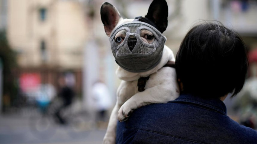 A dog wearing a mask is seen on a street following an outbreak of the novel coronavirus disease (COVID-19), in Shanghai, China March 22, 2020. REUTERS - ALY SONG