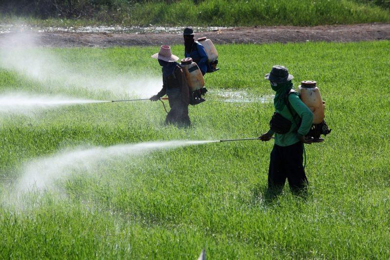 Farmers applying pesticides on farm