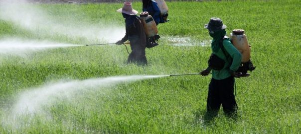 Farmers applying pesticides on farm