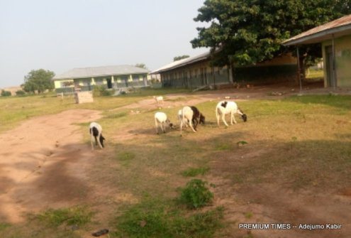 Rams in Ansarudeen sch premises