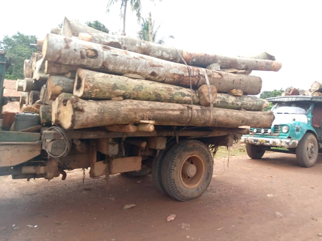 Illegal timbers stolen from Shasha forest