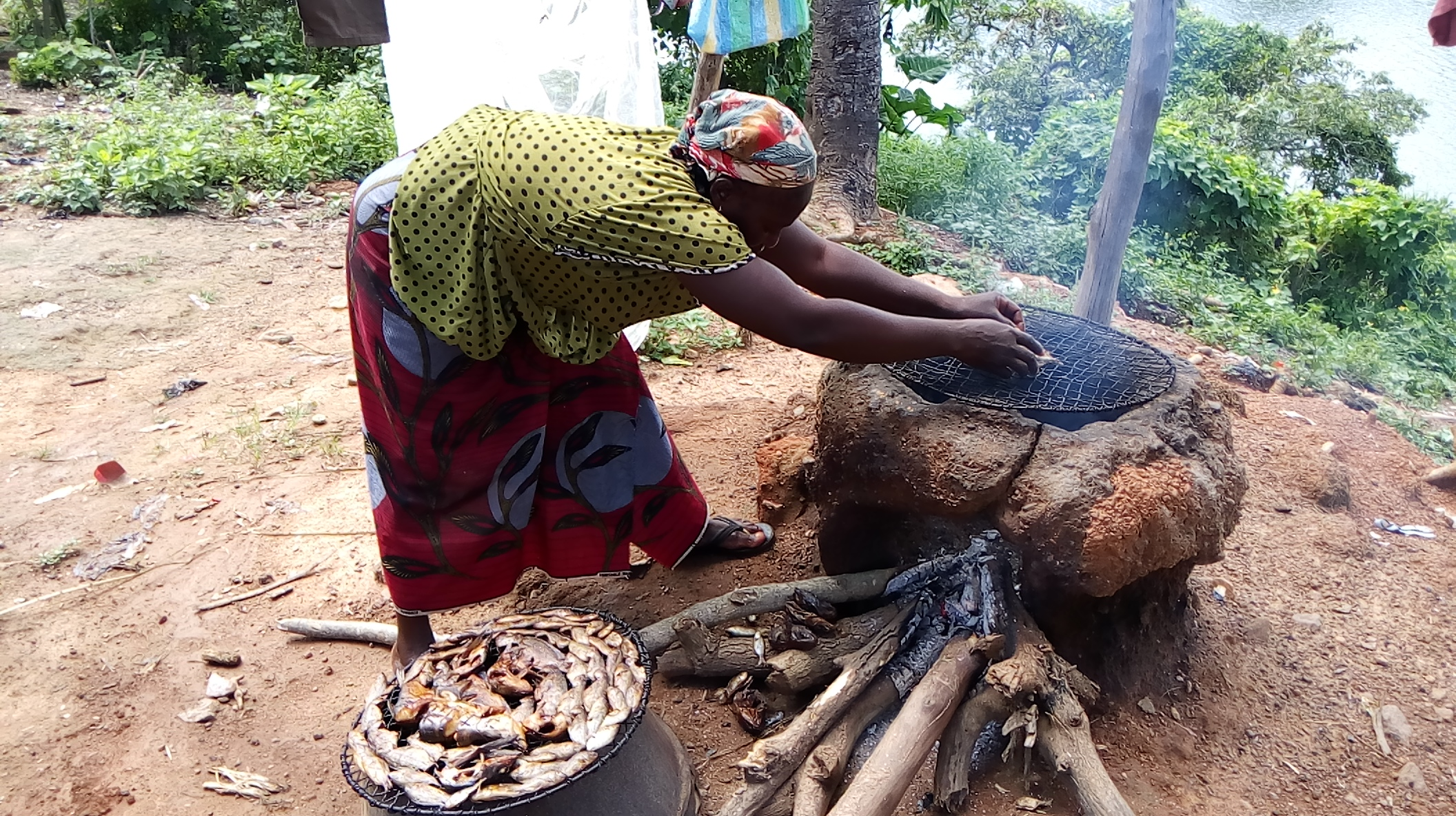 Isa's wife roasting fishes using firewood the actual concern of experts about climate change